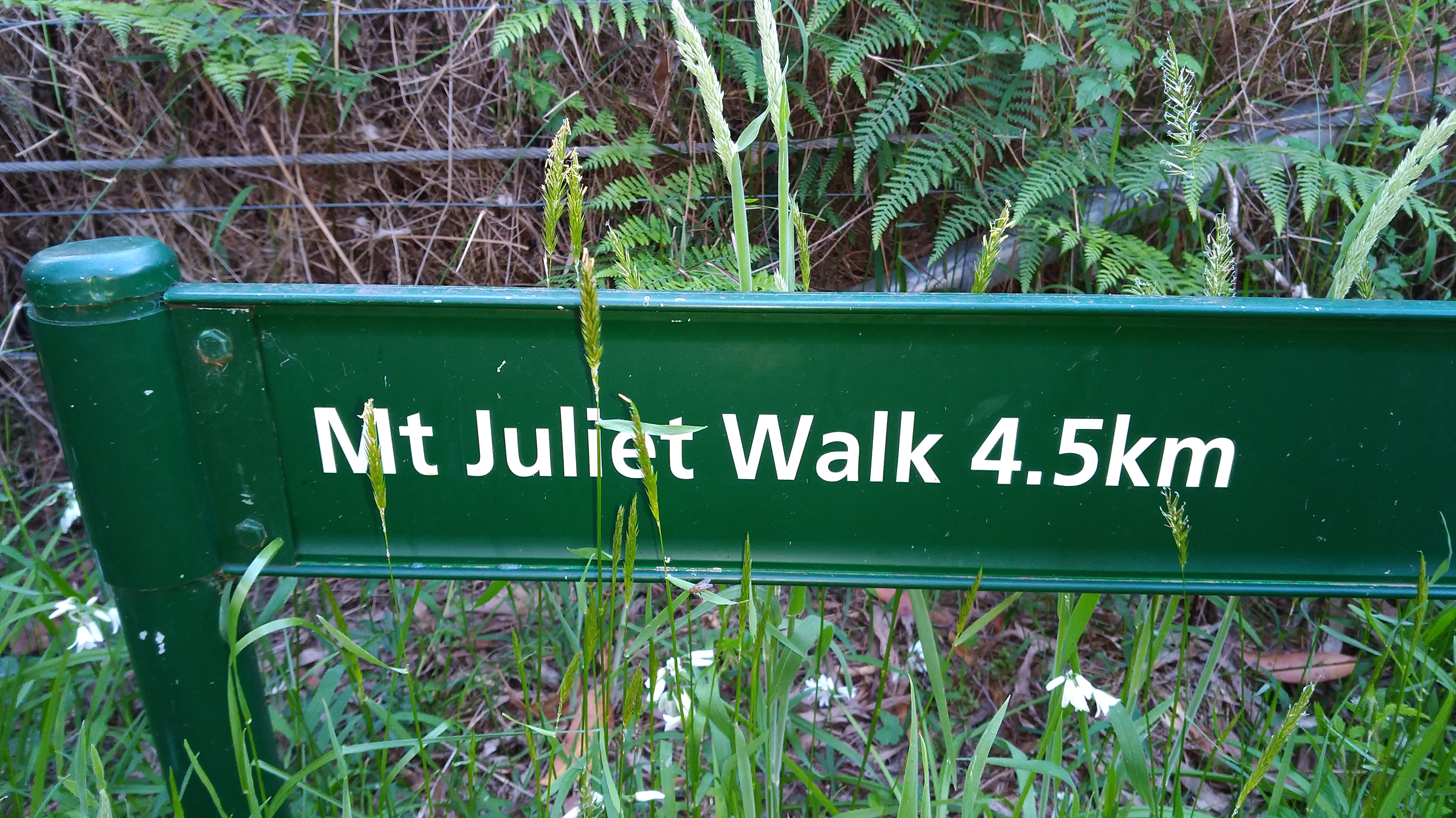 mt-juliet-entry-sign