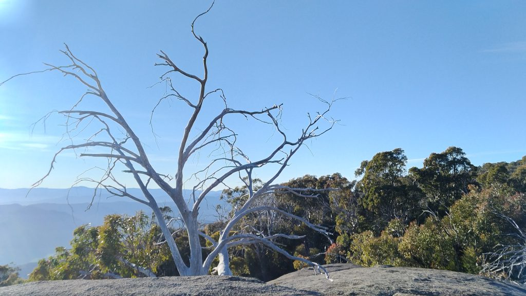 mt-buffalo-view-2